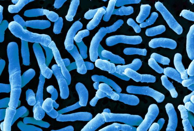 ferment_8_bifidobacterium.jpg
