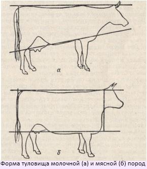 dairy_beef_rus.jpg