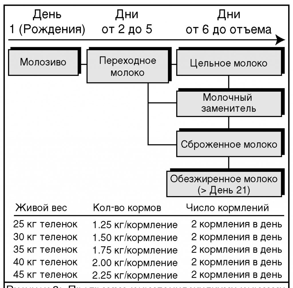 Рецепт комбикорма для телят от 1 до 6 месяцев своими руками